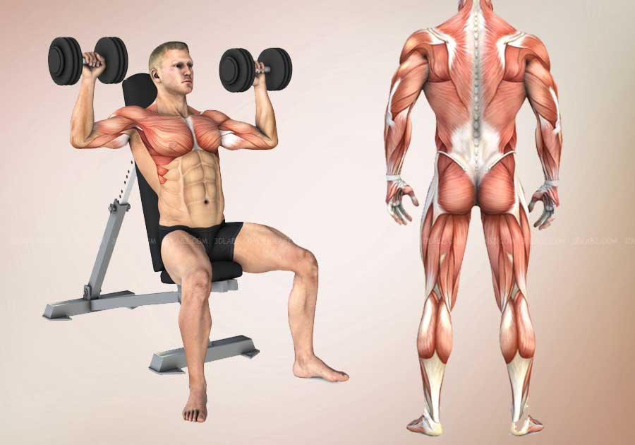 Fitness Exercise and Workout 3D Illustrations