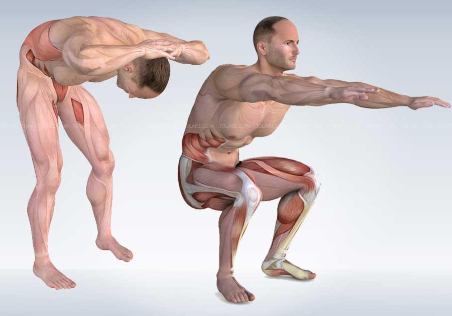 Core Training Fitness Exercises Anatomy Illustrations