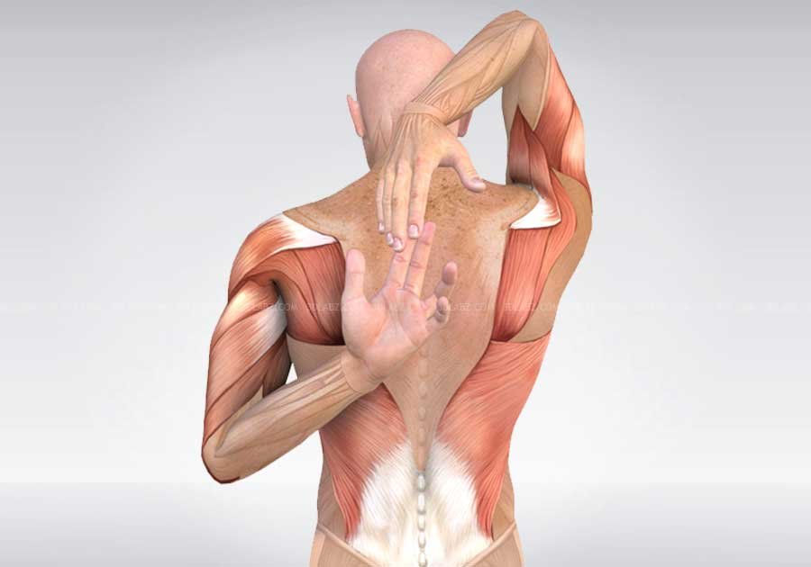 Exercise Anatomy 3d Illustrations Price Cost Charges