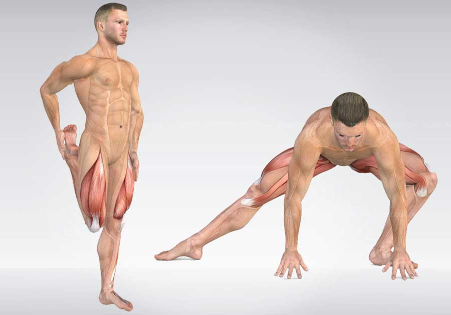 Exercise Anatomy 3D Illustrations  Price, Cost, Charges