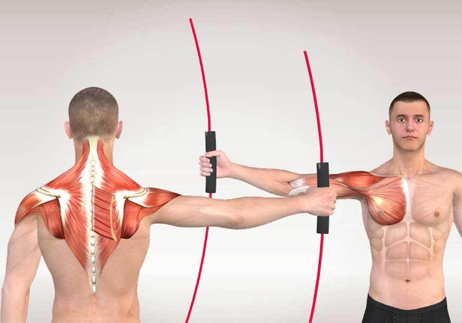 Flexi-Bar Anatomie 3D Illustrations | Flexibar Anatomy