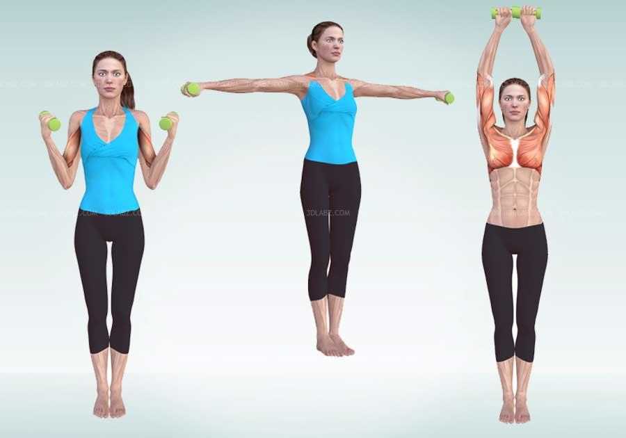 Pilates Exercises Anatomy 3D Illustrations