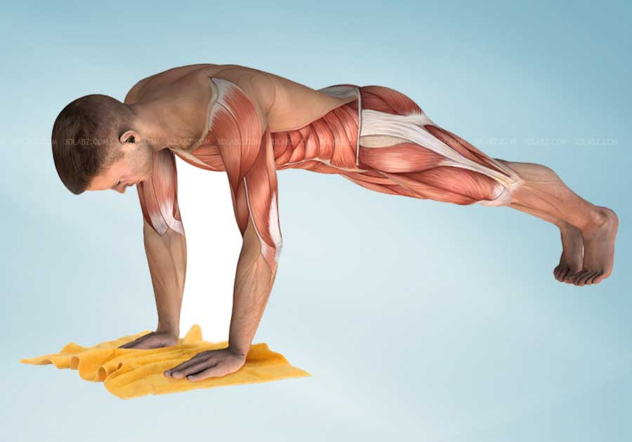 Core Stability Exercises 3D Illustrations