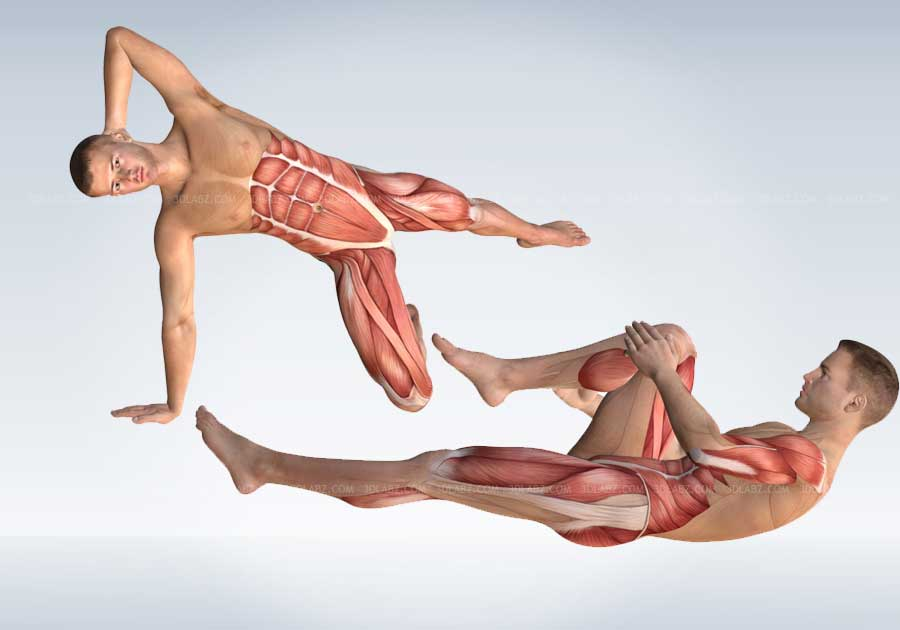 Strength Training Exercises Anatomy 3D Illustrations