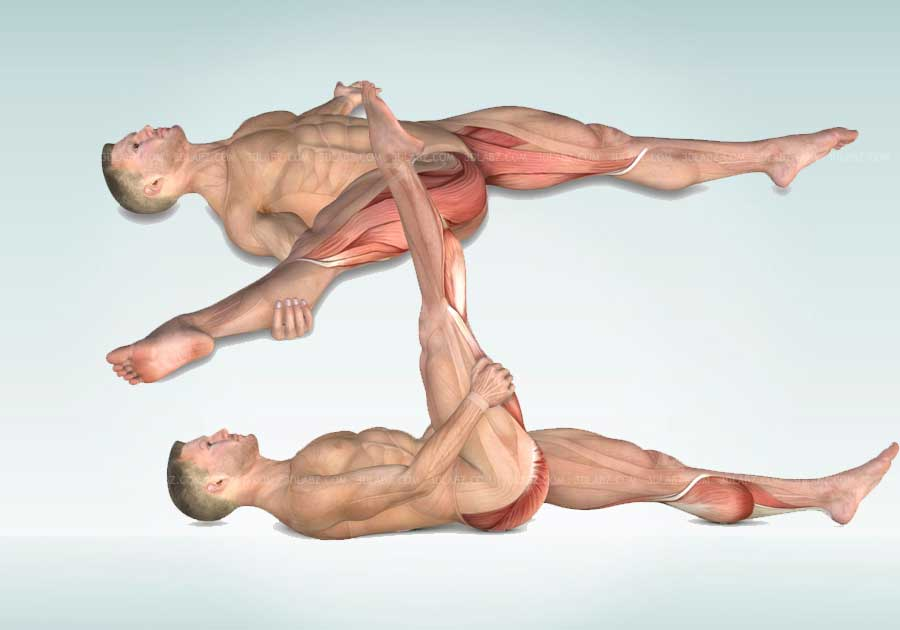 Stretching Exercises Anatomy 3D Illustrations