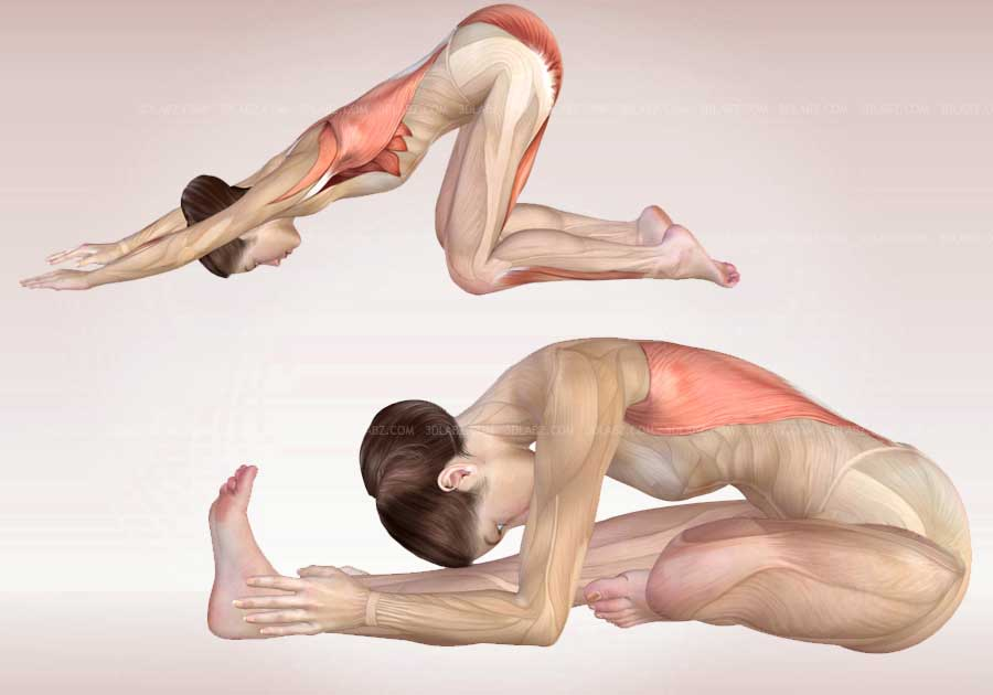 Yoga Poses Anatomy Exercises 3D Illustrations
