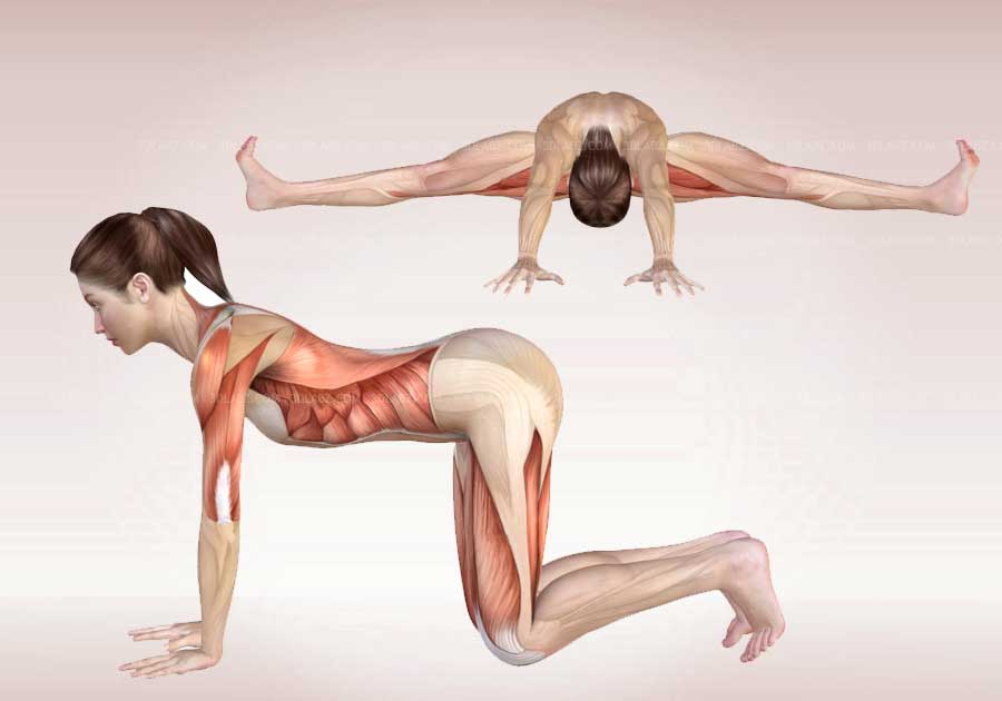 The anatomy of yoga
