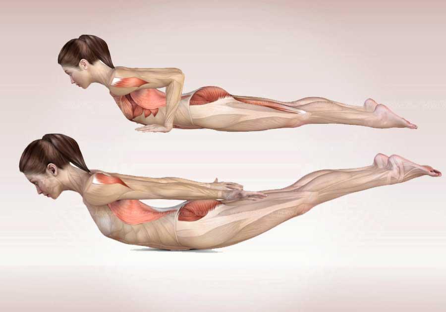 Anatomy and yoga