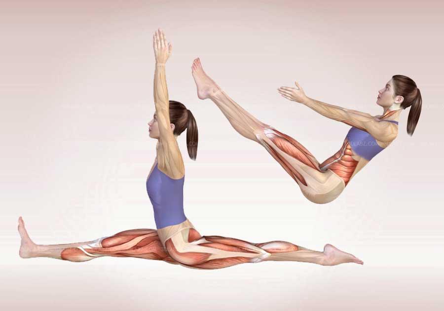 The anatomy of yoga