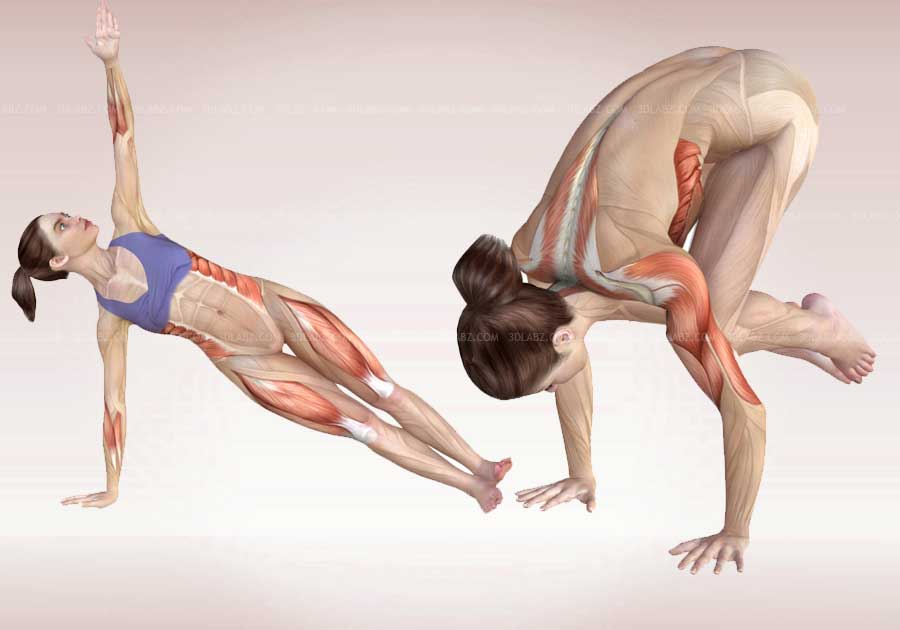 Yoga Poses Anatomy|Exercises 3D Illustrations