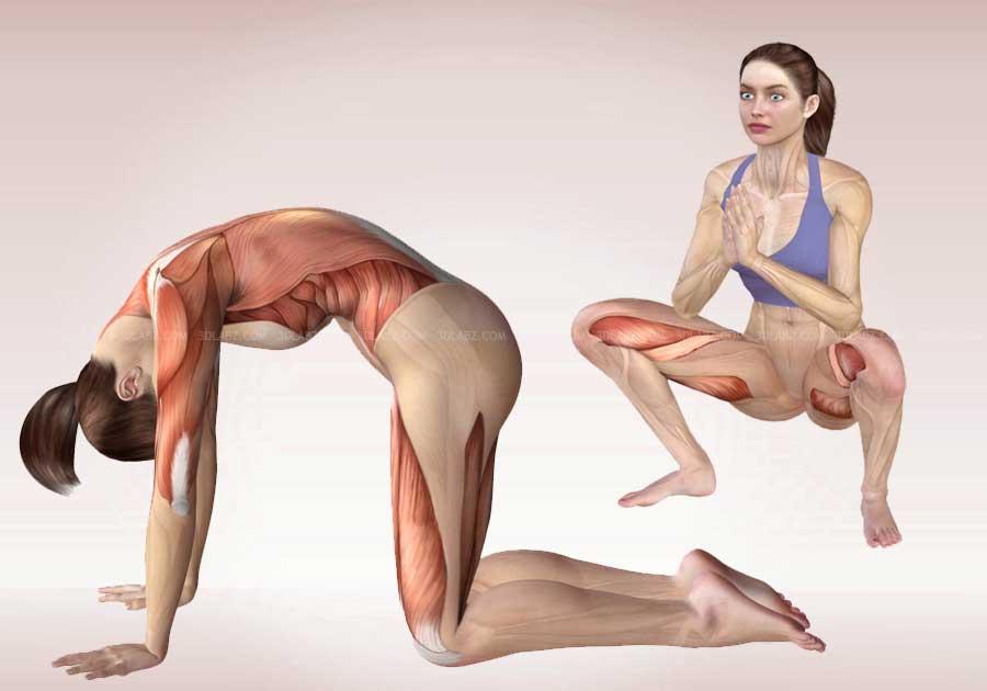 йога с картинками какие мышцы дробны тянуть вес только изрядно