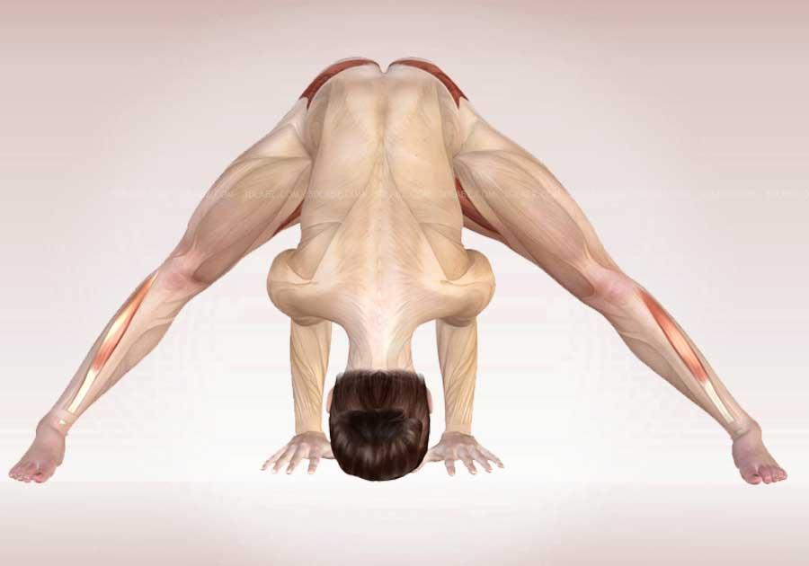 pozi-anatomiya